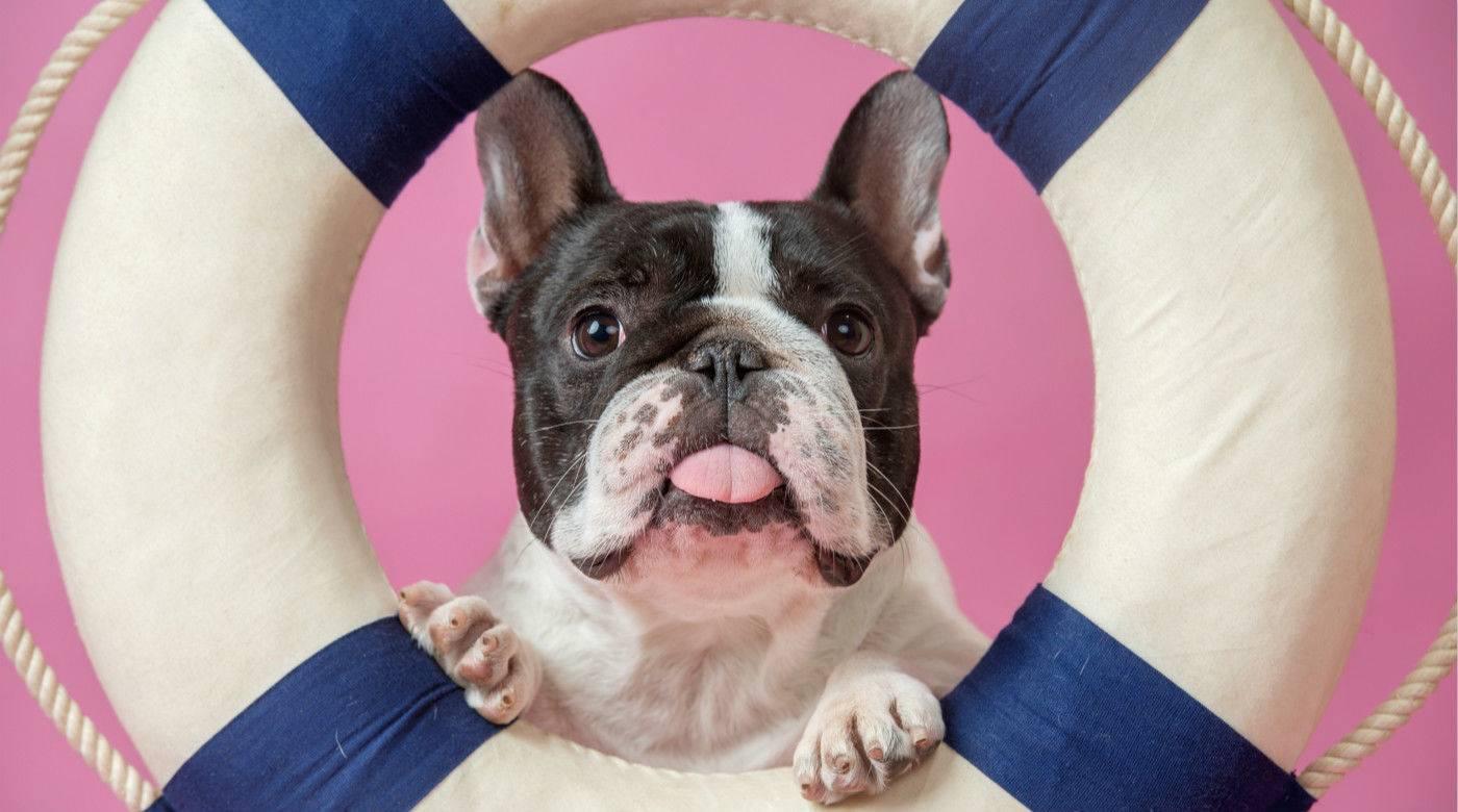 想预测狗狗每天都在做什么?没问题,AI 可以告诉你答案