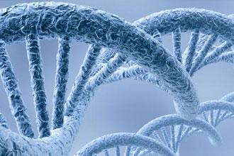 新发现939个与人类智力相关基因