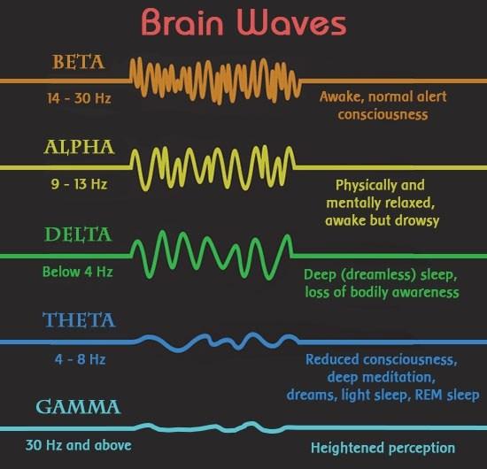 脑电波之谜困惑科学家百年 最新研究称其很重要
