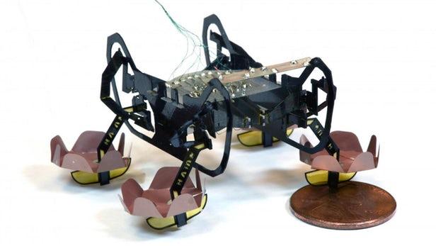 HAMR微型机器人现在可以在水上或水下行走