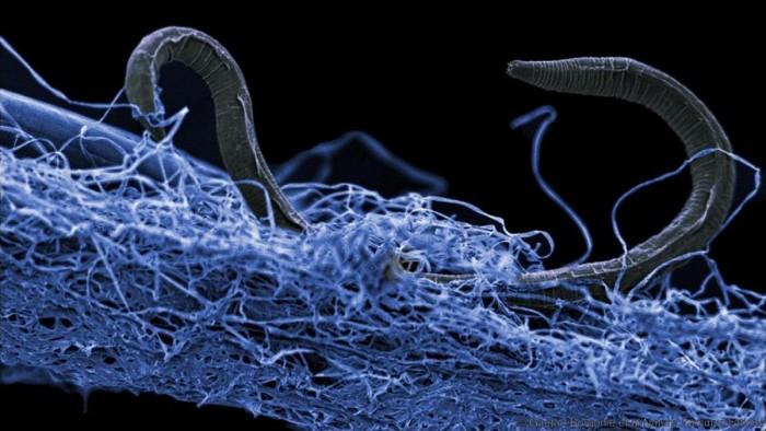 科学家绘制地下生态系统模型 发现生物数量是人类社会的数百倍