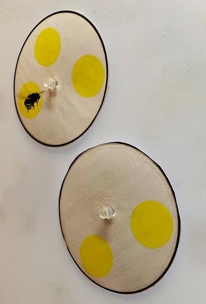 蜜蜂计算数字 仅用4个脑细胞